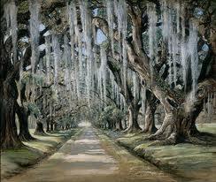 Oak Trees In Goose Creek, SC