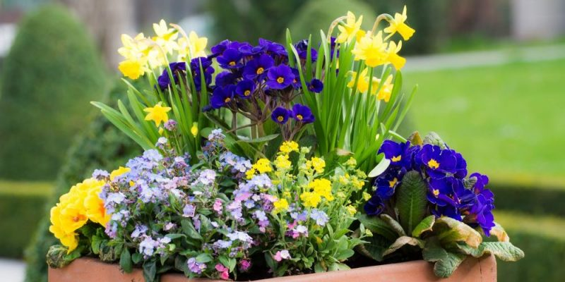 Curb Appeal For Spring
