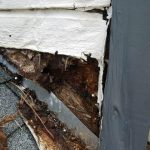 dry rot on home