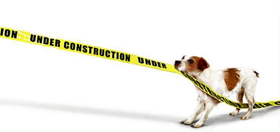 calm anxiety in pets during renovations
