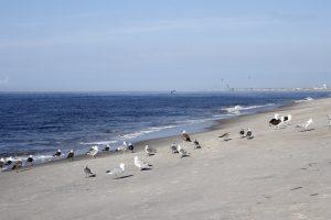 Birds on Caswell Beach
